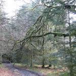 Rando et bivouac dans le parc du Morvan