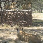 """Parc animalier privé \""""Antilope Park\"""""""
